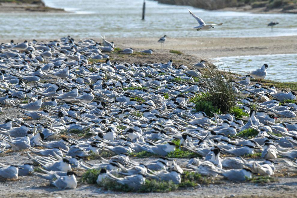Où voir les oiseaux nicher en Vendée ?