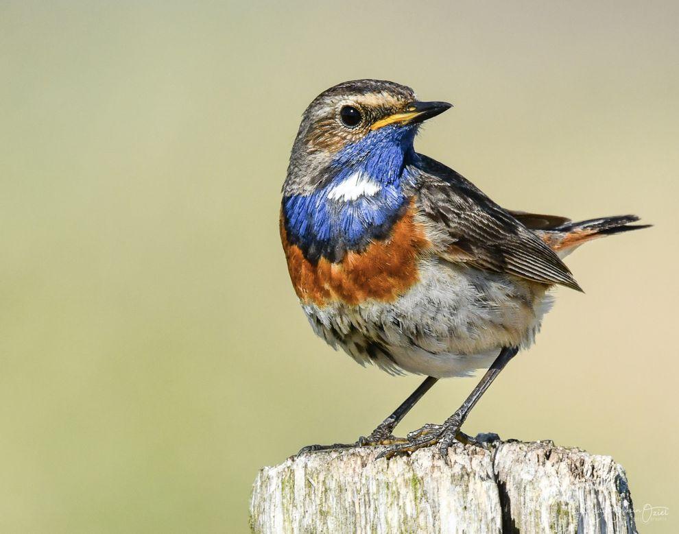 Observer les oiseaux de Vendée