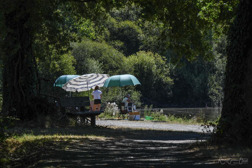 Pêche à la carpe autour du lac