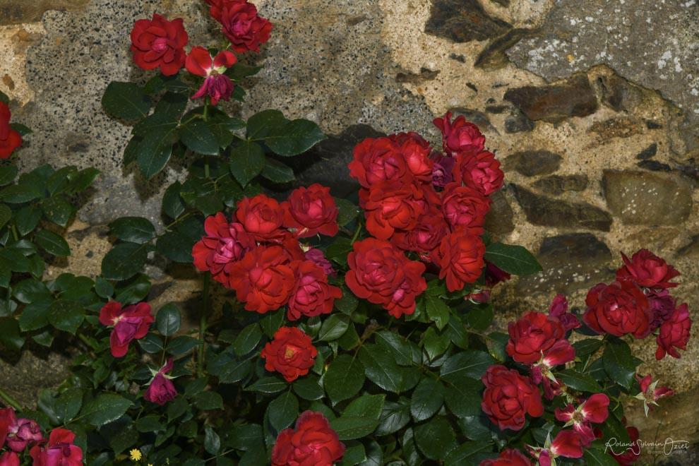 Chambres d'hôtes avec un jardin en Vendée