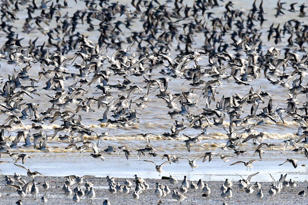 Pour observer des milliers d'oiseaux en Vendée