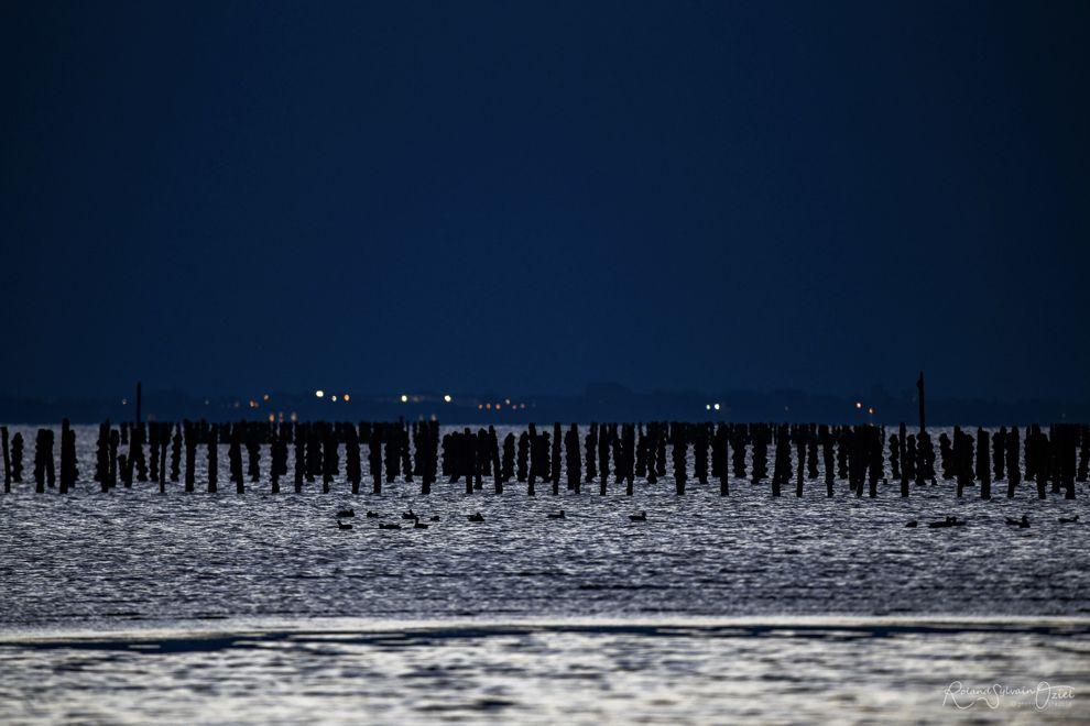 En soirée sur les bouchots de la côte atlantique élevage de moules l'aiguillon sur mer