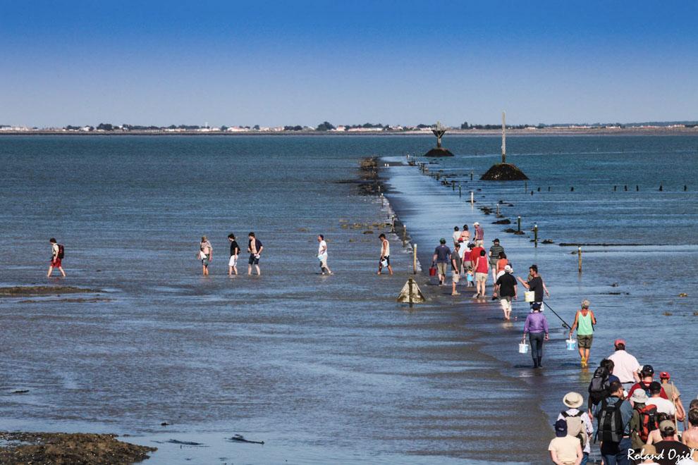 Pêche à pied au passage du Gois les ramasseurs de coquillage
