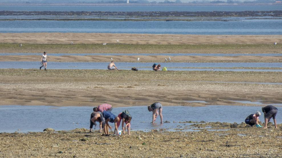 Réglementation pêche à pied sur l'Ile de Noirmoutier pour ramasser palourdes, pignons, tellines, pétoncle ou vénus